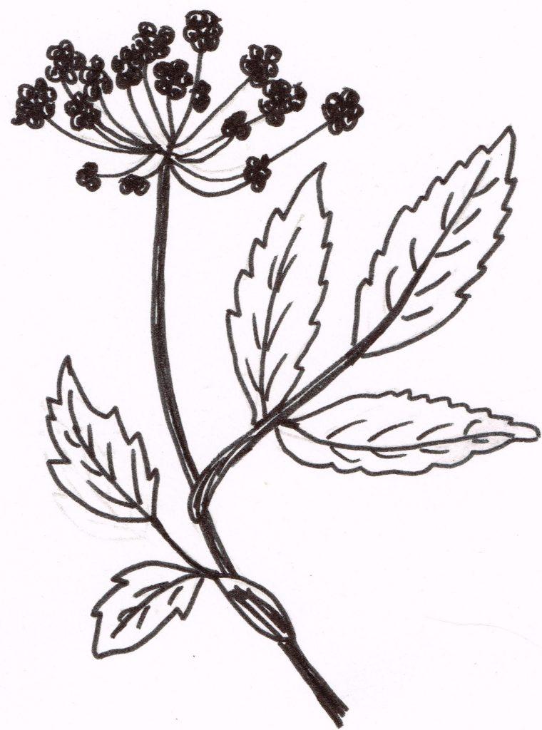 Angelica Logo08092016